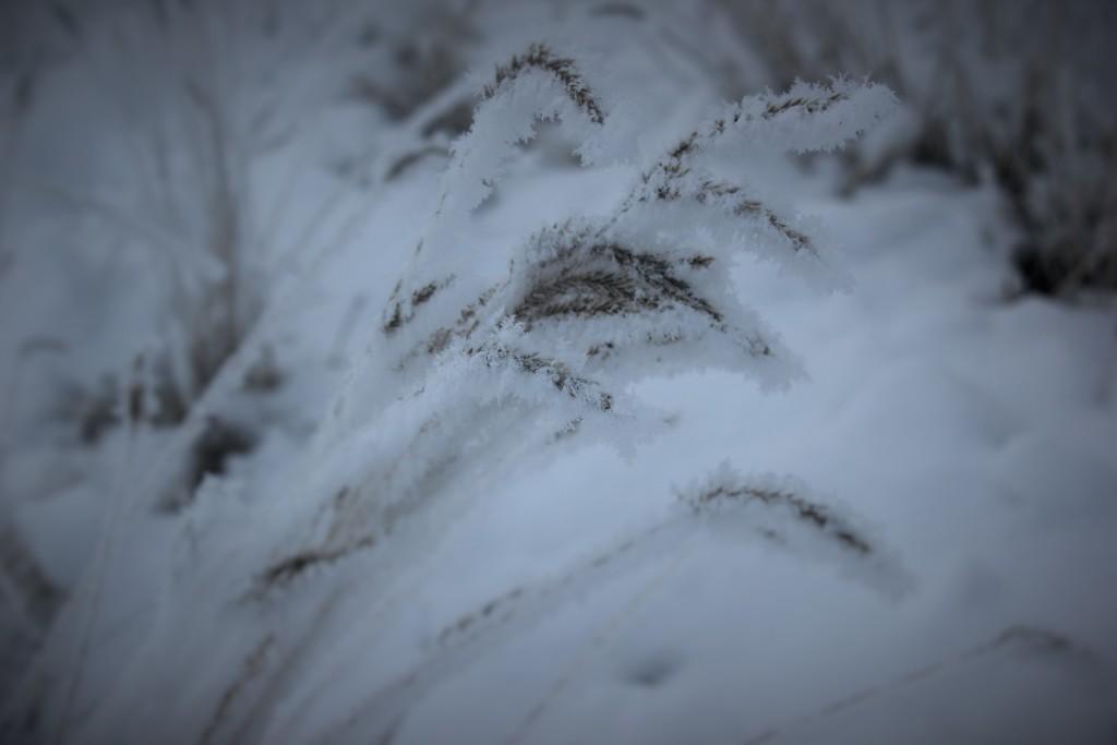 high_desert_frost_5738