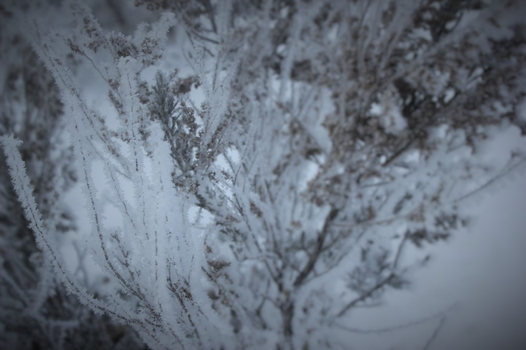 high_desert_frost_5739