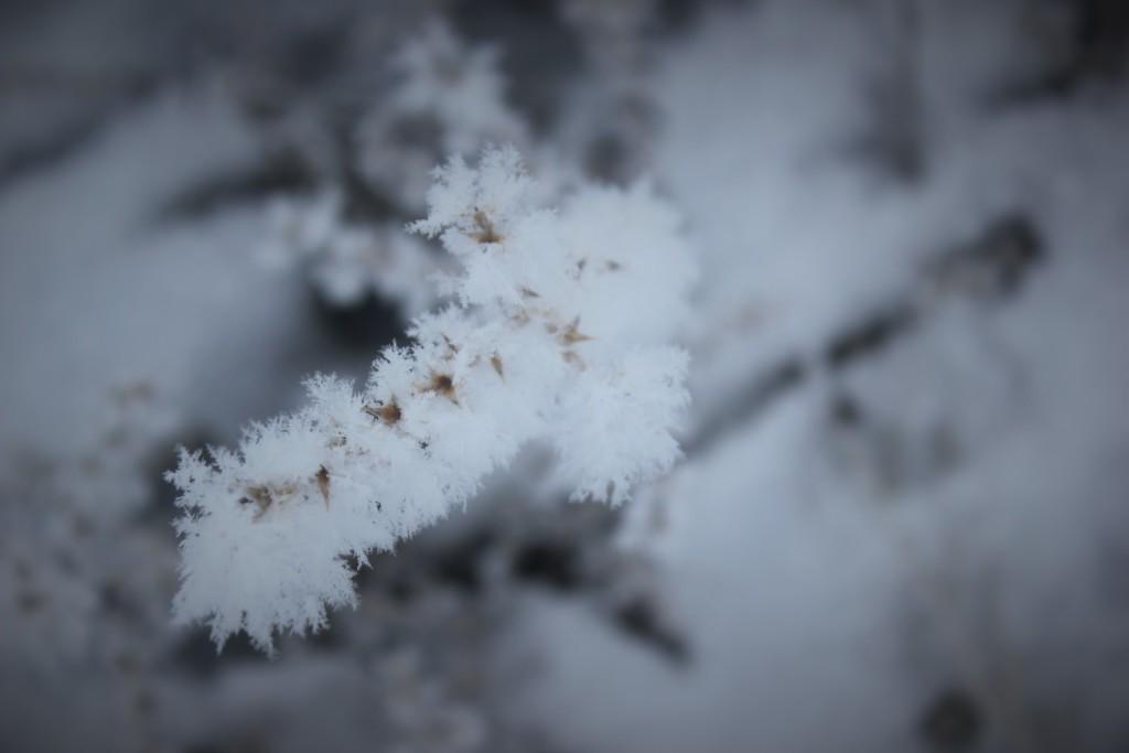 high_desert_frost_5743
