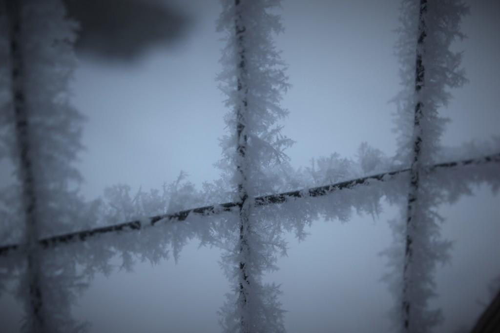 high_desert_frost_5748