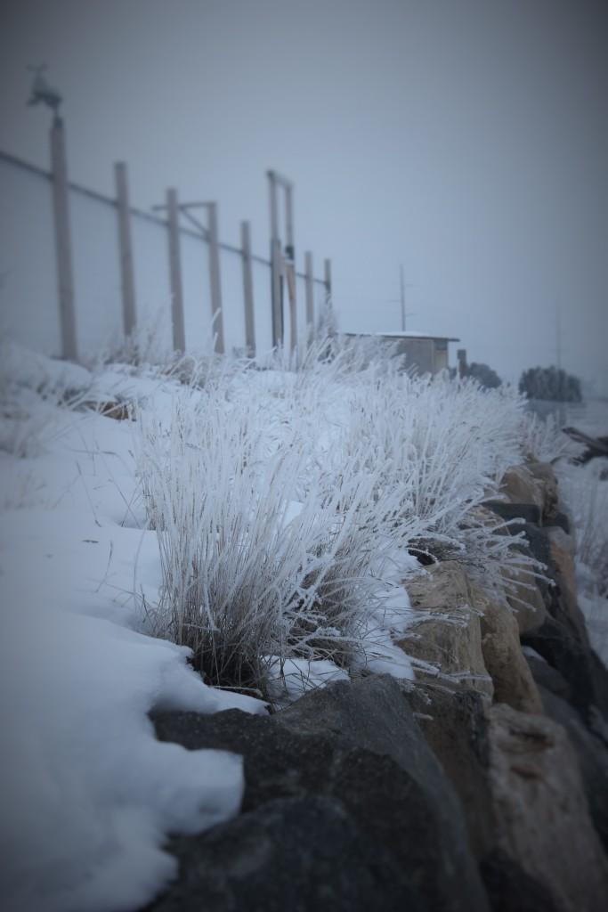 high_desert_frost_5752