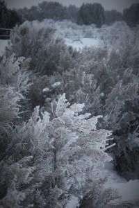 high_desert_frost_5763