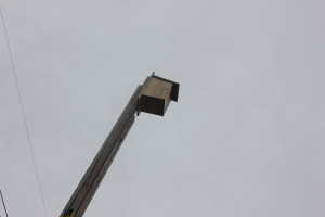 Kestrel nesting box. Photo: Aimee Kieffer