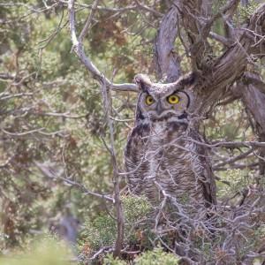 Owl near Eagle Mountain. Photo: Shon Reed