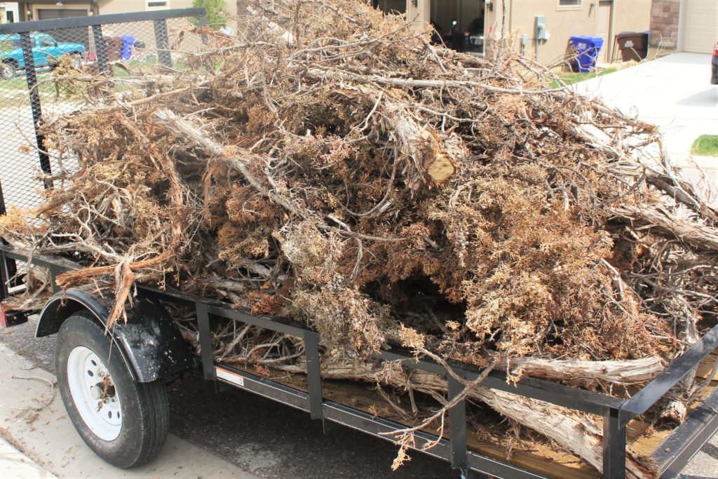 Loaded trailer with the juniper trees.